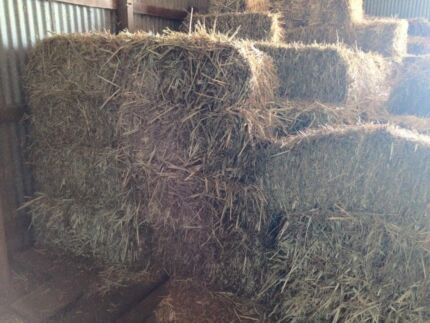 Forage sorghum hay - square bales Lowood Somerset Area Preview