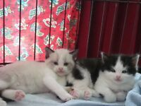 Cat sitter . Cat babysitting in my own home, Cosy bedroom care, cat sitting, overnight stays