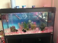 240 Litre Fish Tank and extras