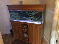 Marine Fish Tank with Full Setup