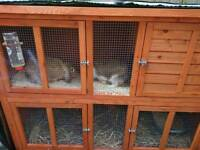 Bonded mini lops and 5ft double hutch