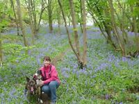 Dog Walker/Small animal sitter - Scunthorpe & surrounding areas