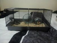 dwarf hamster, cage, food and bedding