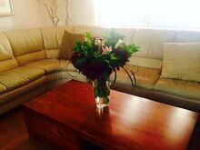 Nick scali genuine leather couch Campbelltown Campbelltown Area Preview