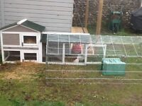 FREE! 3 Guinea pigs, two story cage, indoor cage, outdoor run and waterproof cover. Can deliver.