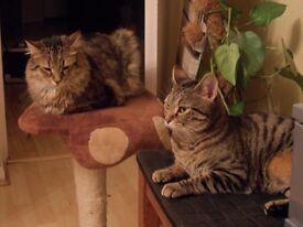 Intelligent Cats For Intelligent & Fun Loving Owner
