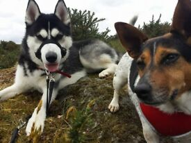 Tell Me a Tail Pet Sitting and Dog Walking (Licensed/Insured Pet Sitter/Dog Walker in Inverclyde)