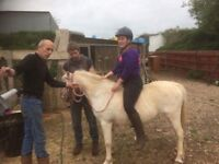 Welsh section mare for sale price negotiable