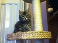 2 beautiful kittens needing a home!!