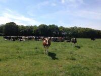 Dairy Farm worker Kent