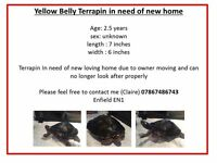 Yellow Belly Terrapin in need of rehoming