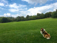 Friendly dog walking/walker/pet sitting service MONDAY TO SUNDAY £8/£19- BRIGHTON & HOVE