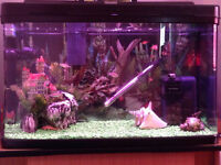 COMPLETE 120L BOW FRONTED TROPICAL FISH TANK