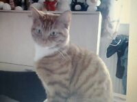 we still have lost one of our cat in bonymaen in swansea if anyone see him plz take him to pdsa