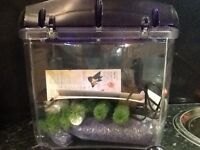 Fish Tank with start up kit