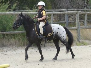 Palouse pony for sale Frankston Frankston Area Preview
