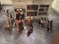 Professional Dog Walker / Home Boarding