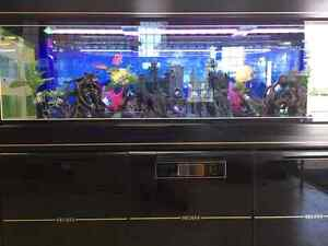***CLEARANCE SALE*** All in one Glass tank with Cabinet Malaga Swan Area Preview