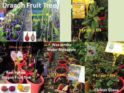 Fruit trees  FOR SALE from $6 Jandabup Wanneroo Area Preview