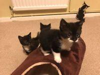 (3) Kittens