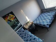 Shared room for rent Kensington Eastern Suburbs Preview