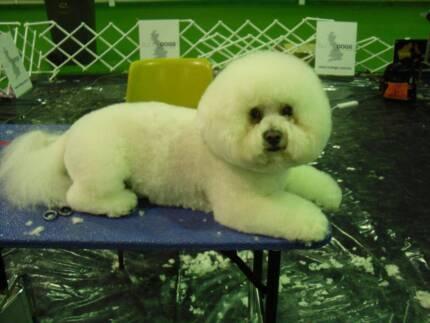Puppy in melbourne region vic grooming gumtree australia free diy dog grooming solutioingenieria Gallery