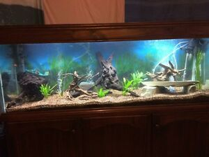 6x2x2 aquarium with stained hood and 3 door cabinet Craigmore Playford Area Preview
