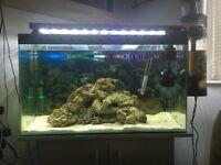 Marine Tank, Protein Skimmer, AquaOne LED, Rock and Sand