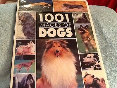 1001IMAGES OF DOGS