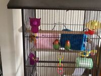 2 rosed faced love birds for sale roughly between 2 and 3 year old.