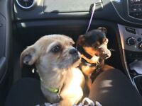 2 young female dogs