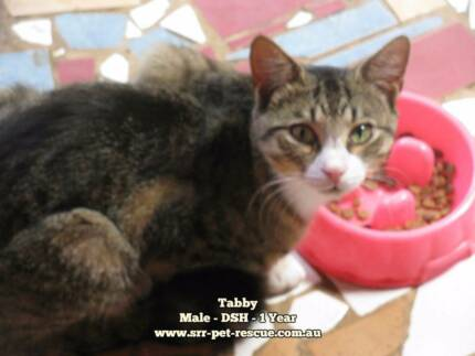 Tabby - Soquilichi Rescue
