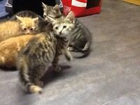 Kittens look for good country home