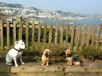 Dog walking, day care and overnight boarding