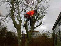 Logs/Tree services/ Fencing / Garden work