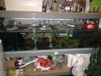 Fish rack plus more