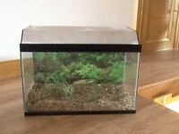 2' fish tank for sale with beautiful coloured background and stones. Immaculate condition.