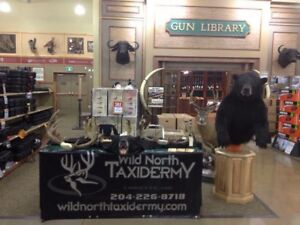 Accepting Kenora and surrounding areas taxidermy work
