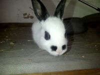 4 baby rex bunnies looking for loving homes