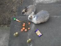 Two lovely rabbits - free to good home
