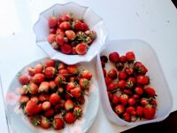 Strawberry plants for sale £0.50