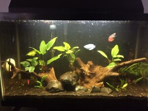 Fish tank / Aquarium- Complete with plants and driftwood