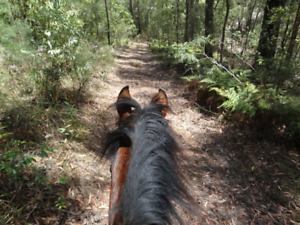 Looking to trail ride