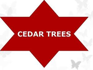 ***A-1 ATTRACTIVE-STUNNING BEAUTIFUL CEDAR TREES *****