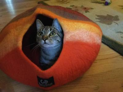 Walking Palm Cat Cave Bed - LARGE - Western Sunset Color FREE SHIPPING from USA  comprar usado  Enviando para Brazil