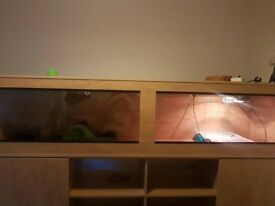 8ft x 2ft x 4ft vivarium & stand with accessories