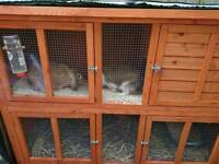 Bonded Mini lops & 5ft double hutch