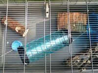 Large pet cage (suitable for hamsters or rats)