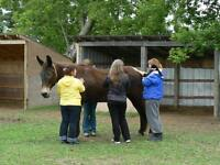 Animal Equine Reiki Training Cobourg ON 905-377-1743