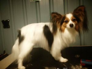 Jess' Professional Dog Grooming Service Bunbury Region Preview